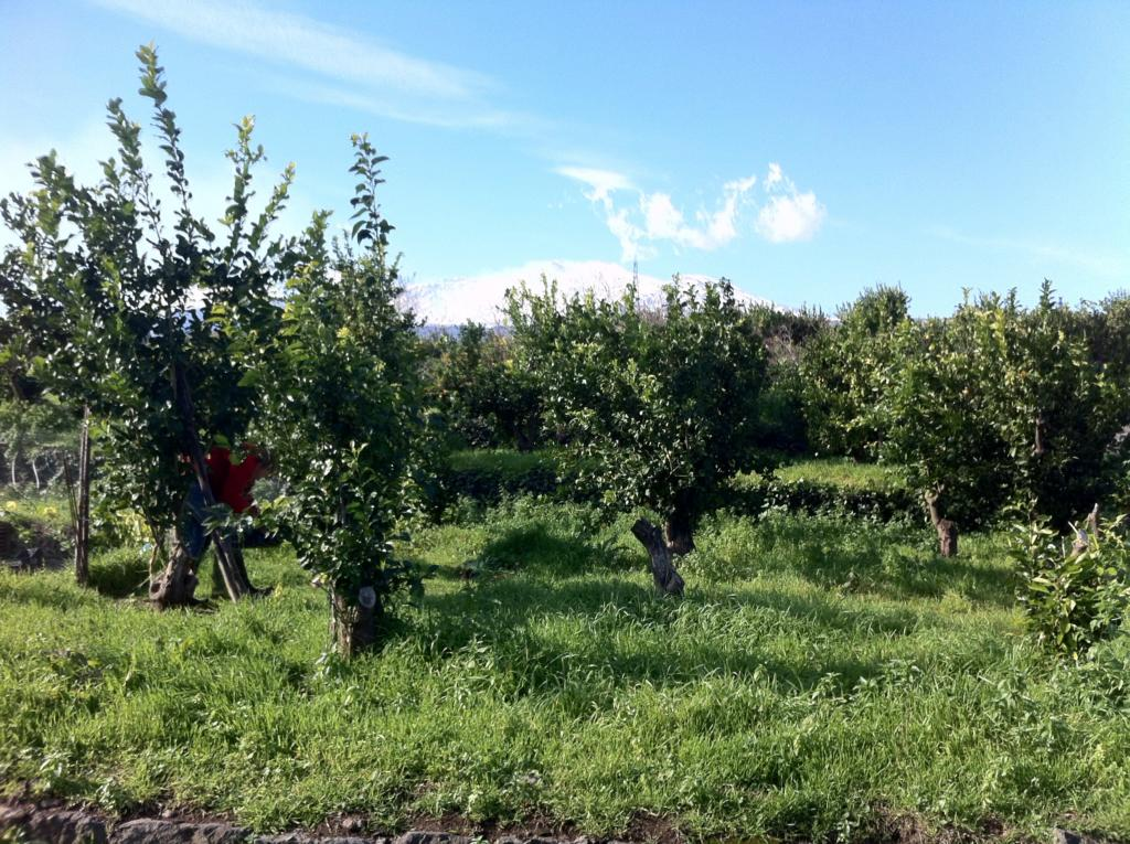 Vendesi terreno con rustico Agriturismo vendesi su progetto vista-etna-terreno-giarre